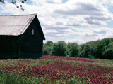Crimson Series: 6 Out by the Little Barn by verenabloo, Photography->Landscape gallery