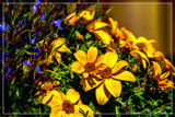 Mixed Foofies by corngrowth, photography->flowers gallery