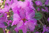 Moms Rhodos by kidder, Photography->Flowers gallery
