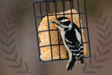 Outside My WIndow #4  A Bird Series by tigger3, Photography->Birds gallery