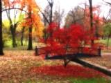 Red Tree Diary by jojomercury, photography->gardens gallery