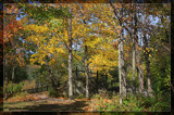 Summer Breeze, Autumn Trees by Jimbobedsel, Photography->Landscape gallery