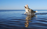 Instant Happiness, just add water! by lilu103, photography->pets gallery