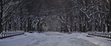 The Mall in Central Park by Piner, photography->landscape gallery