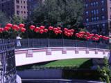 Sister Cities Pedestrian Bridge by bluebiker, Photography->Bridges gallery