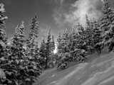 Fresh Snow in Aspen by kentjohnson, photography->landscape gallery