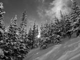 Fresh Snow in Aspen by kentjohnson, photography->landscape gallery