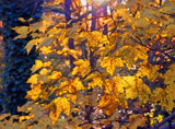 Afternoon Light on Speckled Leaves by sharonva, photography->manipulation gallery