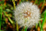 foofy fluffy by solita17, Photography->Macro gallery