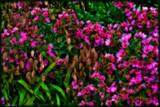 Calendar Garden Color Mix by tigger3, photography->flowers gallery