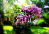 Summer Color Burst by makeshifter, photography->landscape gallery