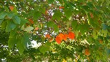 The Leaves Are Changing! by galaxygirl1, photography->nature gallery