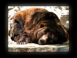 Noah's Ark 6 by Hottrockin, Photography->Animals gallery