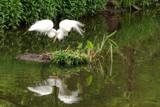 Love Birds by wheedance, photography->birds gallery