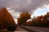 Autumn Neighborhood, Autumn Walk Series: 3 by verenabloo, Photography->Landscape gallery