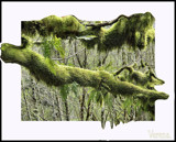 Moss Coverings by verenabloo, abstract->Surrealism gallery
