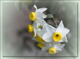Spring Song #2 by LynEve, photography->flowers gallery