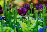 BBG 1 by SatCom, Photography->Flowers gallery