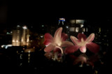 Back from the land of orchid 2 by JQ, Photography->City gallery