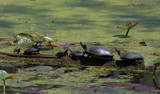 Turtle Sundae by tigger3, Photography->Animals gallery