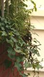 alu lota by priyom, Photography->Nature gallery