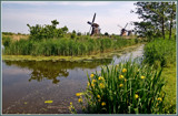 Kinderdijk 05 by corngrowth, Photography->Mills gallery
