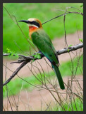 hold still by BluePhoenix, Photography->Birds gallery