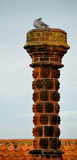 Cottage Chimneys Of Suffolk by braces, Photography->Architecture gallery