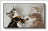 Shhhhh . . do not disturb ! by LynEve, photography->pets gallery