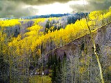 Aspens Above the Conejos River by fotobob, Photography->Landscape gallery