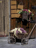 onion cart by bonur, Photography->Still life gallery