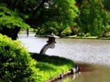MBG - Japanese Garden IV by Hottrockin, Photography->Water gallery