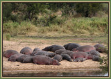 SUNBATHING> by SusanVenter, Photography->Animals gallery