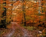 Into the Woods by trixxie17, photography->manipulation gallery