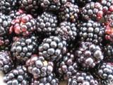 Blackberries by molefi, photography->food/drink gallery
