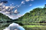 Pee Dee OXBOW by Mvillian, photography->landscape gallery