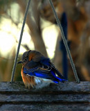 Another One At The Feeder_What Am I? by tigger3, photography->birds gallery
