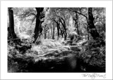 The Dalby Forest by JQ, Photography->Landscape gallery
