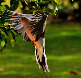Poised for Landing by SR21, Photography->Birds gallery
