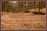 Wood In Disguise 2 (of 4) by corngrowth, Photography->Landscape gallery