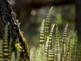 All The Little Ferns by d_spin_9, Photography->Nature gallery