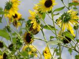 Hiding by kidder, Photography->Butterflies gallery