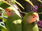 Mirror by Calypso, Photography->Birds gallery