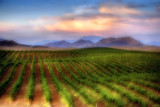 The Secret Vineyard by Surfcat, photography->manipulation gallery
