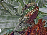 Colors and Textures by Ramad, photography->reptiles/amphibians gallery