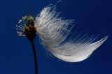 Feather in the wind by rozem061, Photography->Still life gallery