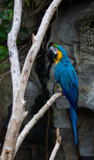 Macaw by Pistos, photography->birds gallery