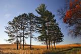 Prairie Dawn by Silvanus, photography->landscape gallery