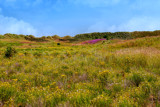 Lower Sand Dunes Nature Preserve by corngrowth, photography->landscape gallery
