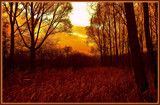 Evening Silence At A Forest Edge by corngrowth, Photography->Sunset/Rise gallery